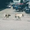 タイに行ってきた。(5)〈ツアーその後前編〉