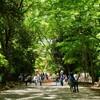 下鴨神社までの森の通り道~糺の森に癒される