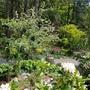 5月の初めの庭