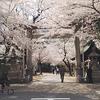 名古屋の桜の名所|那古野神社(なごやじんじゃ)と名古屋東照宮の御朱印