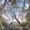 夕暮れどきの桜 に包まれる #360pic