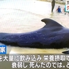 プラスチックが原因でクジラが死亡