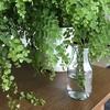 ローズマリーを挿し木で増やす方法