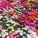 脳内花畑ニートの日常