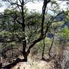 座頭谷から樫ヶ峰へのハイキング(その6)小笠峠道