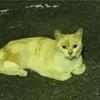 野良猫の保護に向けて【5月12日~5月16日】