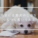 たまには愛犬のことをつらつら書いてみる