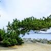 松が美しい今津の『白山神社』