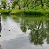 姿見の池(東京都国分寺)