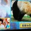 パンダのしっぽは 白? 黒?