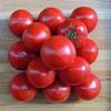 カプッとまるかじり…ほとばしるように旨いトマトが喰いたい