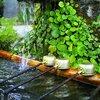 大晦日の朝に1年の感謝を伝える神社参拝の習慣  /【瞑想23日目】
