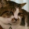猫の喉ゴロゴロは「安心してるよ~」発信