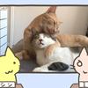 猫「こっち来たらシャーするぞ!」〜1カ月後〜「ズッ友だよ!」
