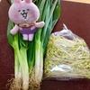韓国の青ねぎを韓国人の友達から貰ったんですが、どうやって食べようか?