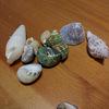 しつこく貝殻を購入