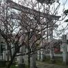 あきた桜前線