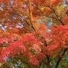 伴走母から見た秋/part24。