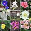 雨とお米の配達と畦畔の草刈りと庭の花
