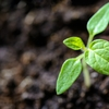 植物も生きているのに食べていいの?