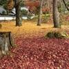 京都東山の紅葉狩り 〜南禅寺〜