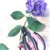 アジサイの切り花を長く楽しむ方法
