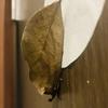 【閲覧注意】枯葉が落ちずにくっついてる
