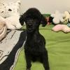 保護犬さんホットラインセッション始めました!