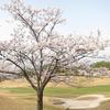 桜満喫のゴルフ