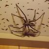 「蜘蛛の待つという戦略」と「蜜蜂となる戦略」