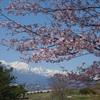 安曇野 桜巡り 3
