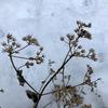 枯れた花のセピア色