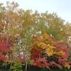 紅葉ハイシーズンの混雑時間に札幌旭山記念公園に車でいくなら
