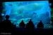 水族館好きのための究極イベント!? おひとりさまナイト@仙台うみの杜水族館に初参加‼︎