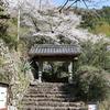 慎太郎ゆかりの史跡「松林寺」の桜