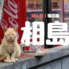 【猫の島】フェリーで20分!福岡にある猫の島「相島」は本当に猫だらけだった。