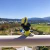 【相棒さんぽ】鹿児島県出水市はツルの町!まじで人生で1度は見たい絶景?かな