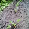 土を耕す仲間
