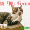 ホテルニューオータニ幕張の鉄板焼「欅(keyaki)」に行った感想と評価