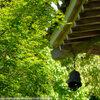 山辺の道、玄賓庵・檜原神社 そして再び大神神社