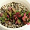 多肉植物6