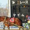 【帯広】冬のばんえい競馬観戦。帯広競馬場はレース以外にも見どころたくさん!