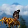【計画】小袖登山口〜雲取山山頂往復