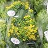 産直はる野菜&今日のチューリップトリオは自由奔放