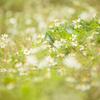 新治里山には、小さな住人だけでなく花も沢山咲いているんだよね。名前を知らないから残念だな。