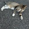 【1歳児】保育園生活23週目。猫が好き。