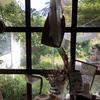 済州島(チェジュ島)カフェ巡り #フォトジェニックカフェ(2)「味男美女」