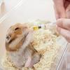 【動物病院へ】血尿で受診。膀胱炎か、精巣肥大か。お薬を処方してもらいました。