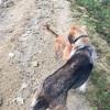 スペイン巡礼33日目 〜3匹の犬とスペインの西の果て、フィステーラへ大冒険!!笑〜