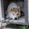 犬も長雨疲れ